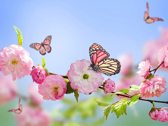 Refresh and Renew with the Energy of Spring